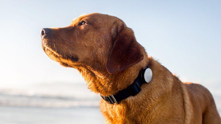 GPS für Hunde